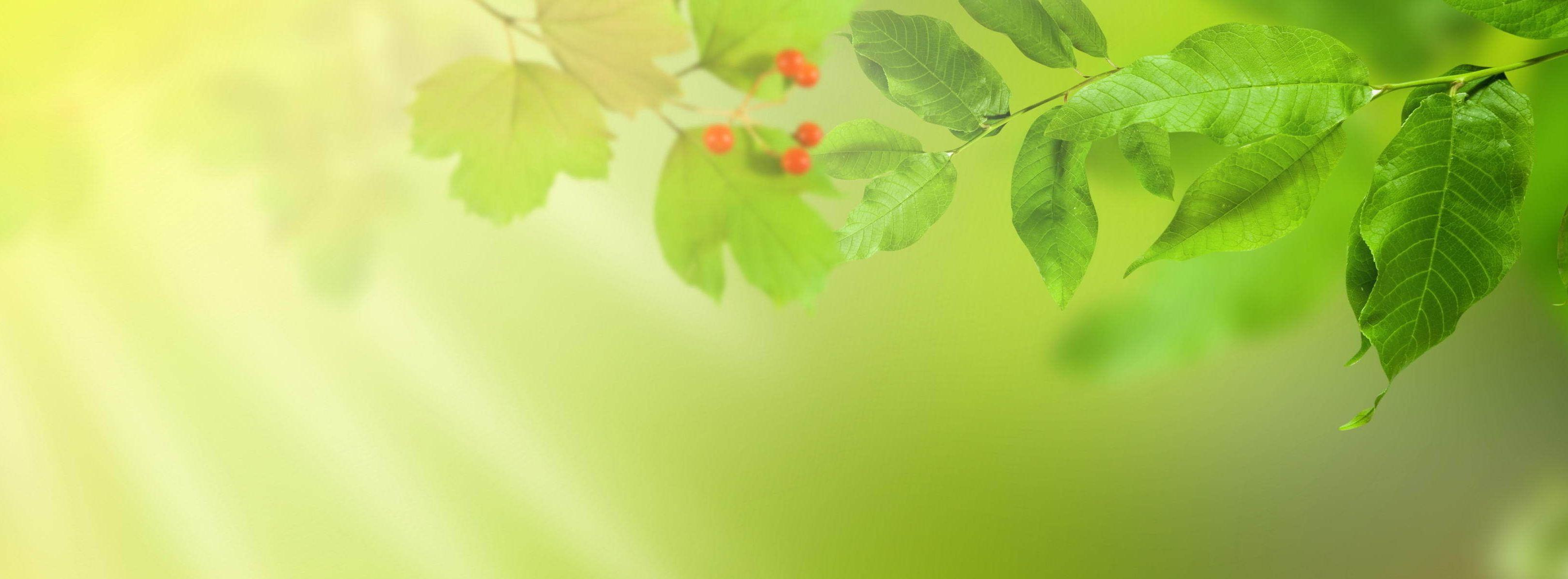 Зелена студія